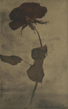 R. Rampinelli: Rosa ultima (2010)